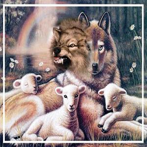 گرگ و بره گوسفند در کنار یکدیگر
